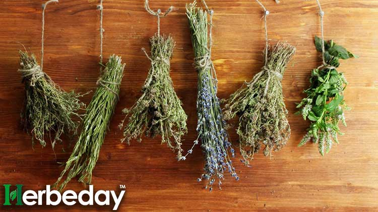 Dried-Herbs-online-shop