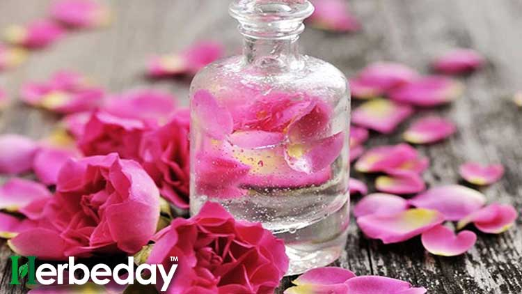 where to buy rose water